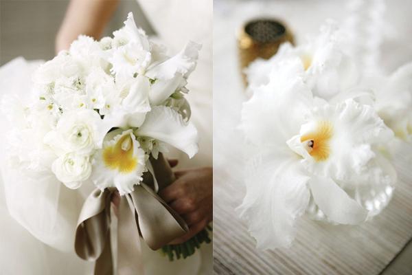 White-Cattleya-Orchids