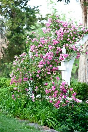 Elegant-Garden-Wedding-Inspiration