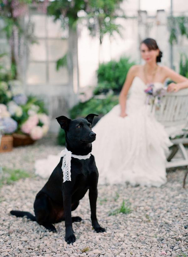 Wedding Dog Lace Collar Elizabeth Anne Designs The