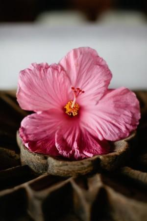 Hibiscus Wedding Flowers