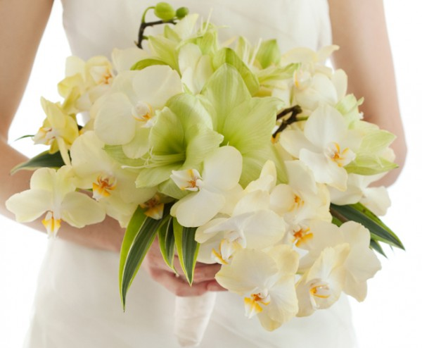 friday flowers phalaenopsis orchids  elizabeth anne designs the, Natural flower