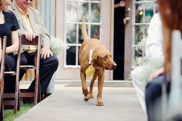 Dogs In Wedding Ceremony