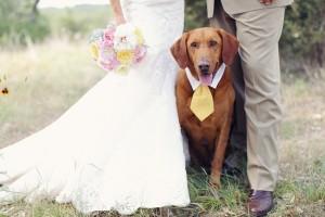 Dogs In Weddings 31