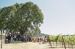 Rustic Vineyard Wedding Braedon Photography 1