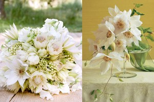 White Clematis Bouquets
