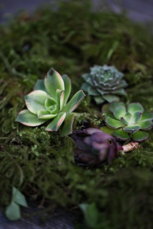 Succulent and Moss Wedding Decor