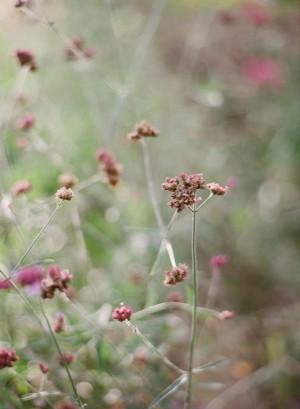 Sweet Fall Engagement Shoot by Melissa Schollaert Photography 10