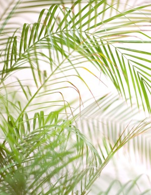 Tropical Wedding Destination Ideas