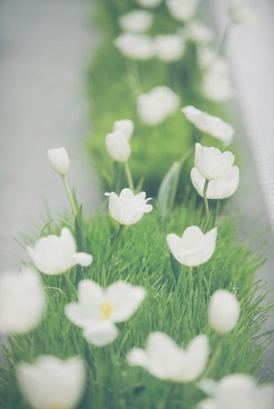 White Tulips in Grass Containers