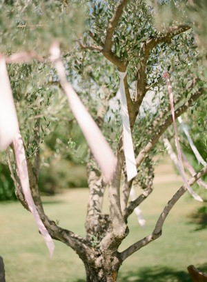 Ribbons Tied to Branches in Vineyard