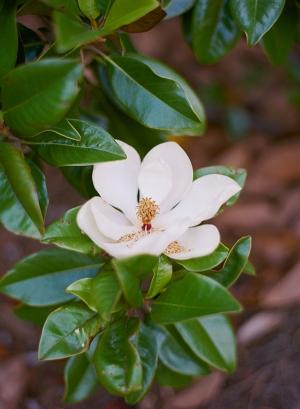 Atlanta Botanical Garden Wedding Venue 1