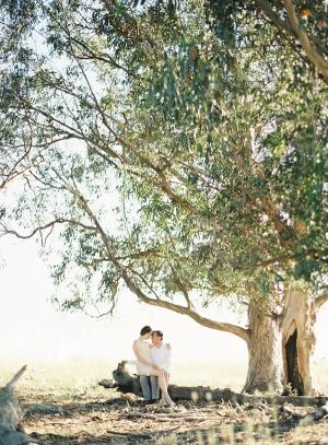 Big Tree Engagement Shoot