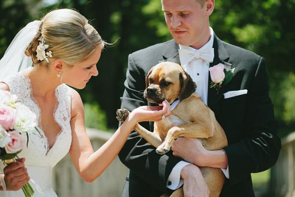 Dogs In Weddings Ideas