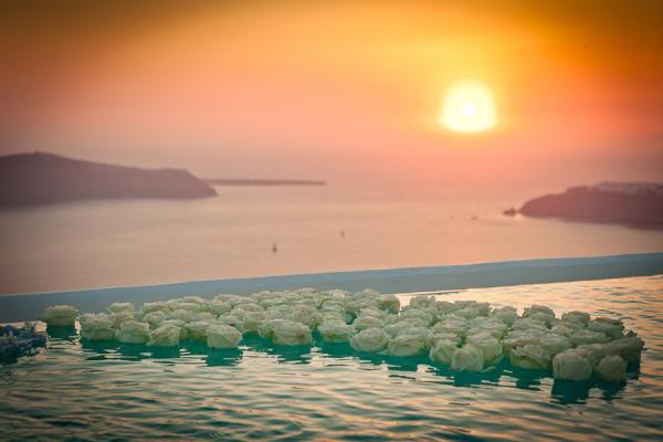 Infinity Pool Floating Flowers
