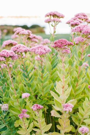 Pink and Green Garden Flowers Wedding Venue Ideas