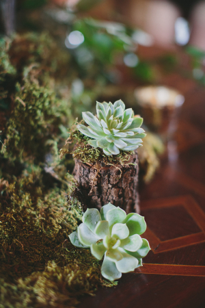 Succulent and Moss Decor