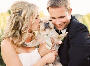 Wedding Puppy in Striped Tie