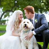 Dog in Bow Tie for Wedding Ceremony