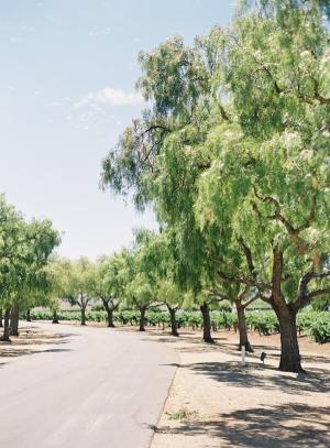 Gainey Vineyard California Wedding Venue