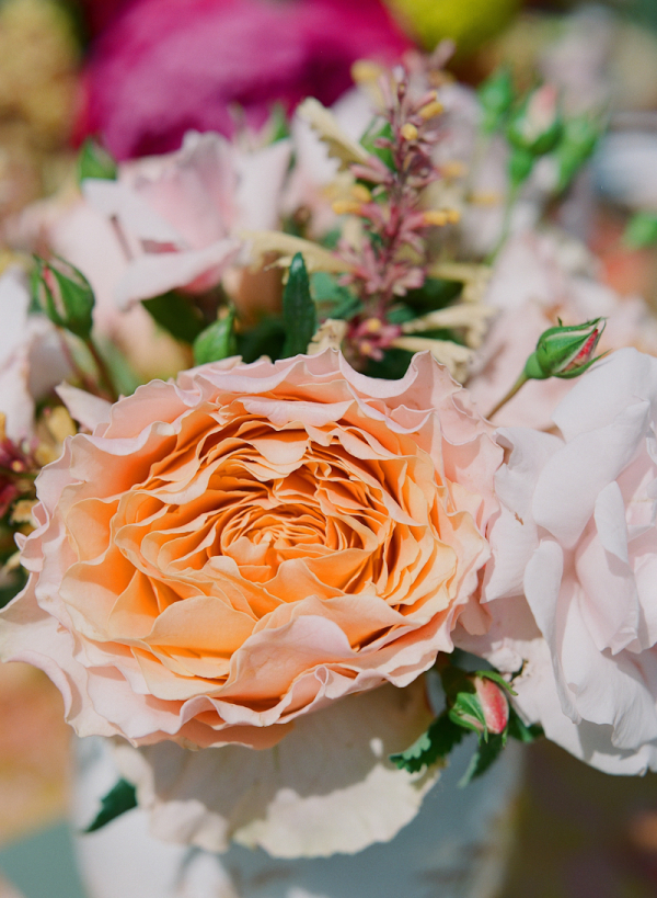 Peach Flower Bloom