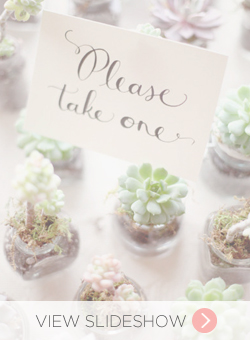 Succulents in Weddings