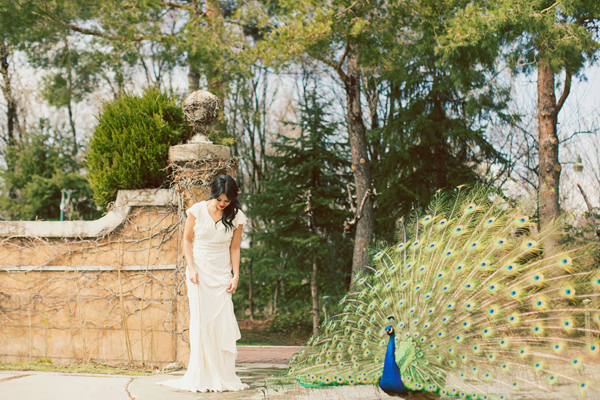 Bride Standing With Peacock