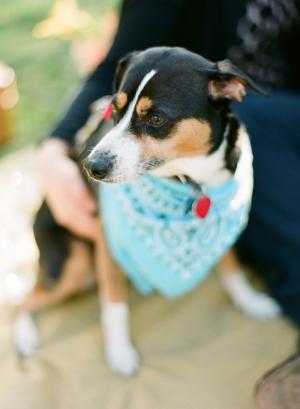 Dog Wearing Blue Bandana