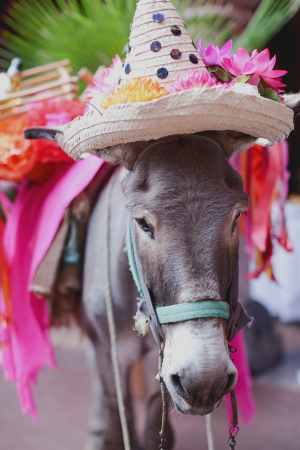 Donkey Wearing Sombrero