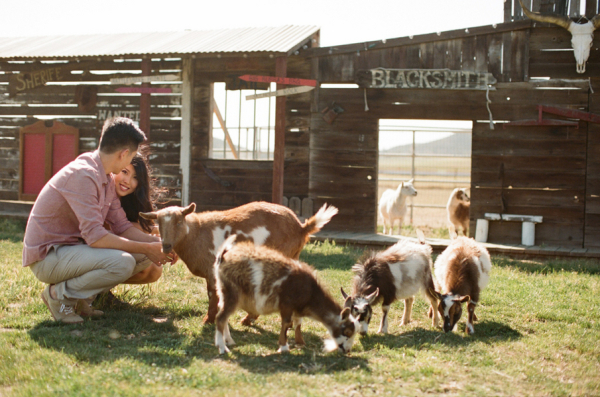 Engagement Photos With Barn Animals