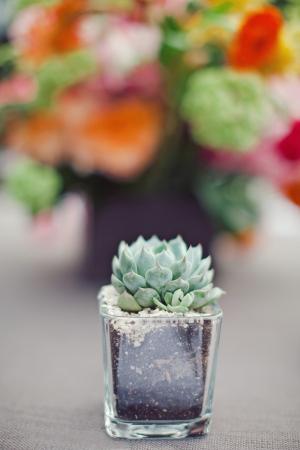Succulent Cocktail Centerpiece