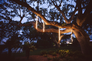 Light Strands Hanging from Tree