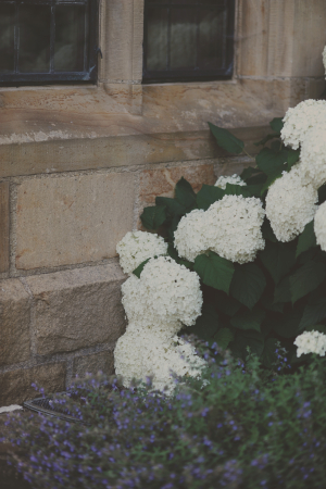 White Hydrange Bush by Stone Wall