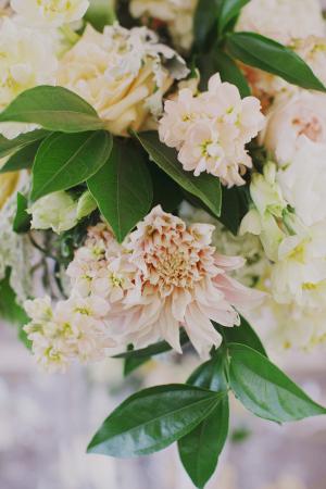 Pale Peach Flowers