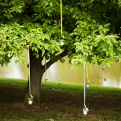 Hanging Lights in Trees