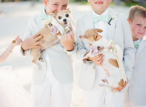Chihuahua Ring Bearers