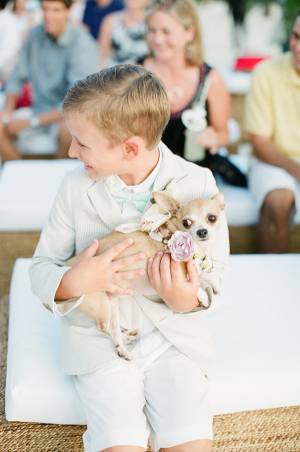Chihuahua at Wedding