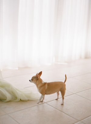 Dog at Wedding1