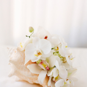 Orchid Bouquet in Seashell