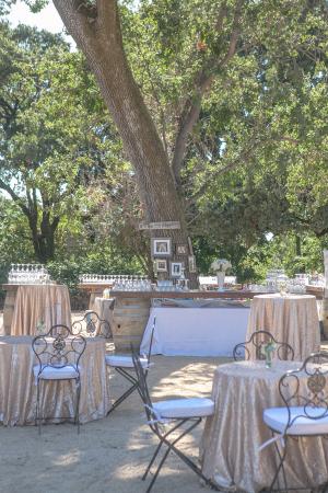 Outdoor Reception Under Trees