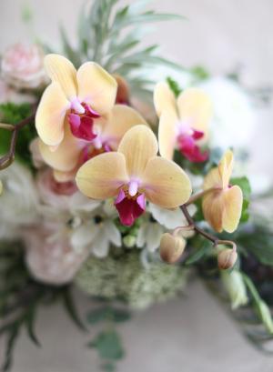 Peach Orchid Centerpiece
