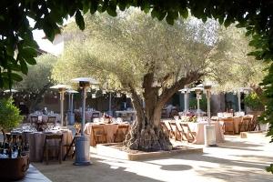 Reception Under Trees