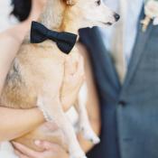 Bowtie on Dog