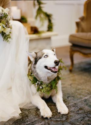 Husky Winter Wedding