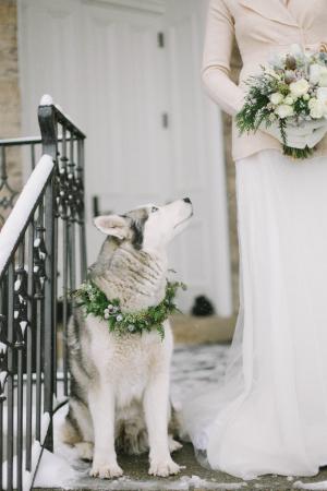 Husky in Winter Wedding