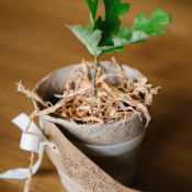 Potted Plant Wedding Favors