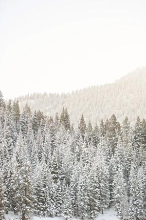 Snowy Trees in Tibble Fork Utah