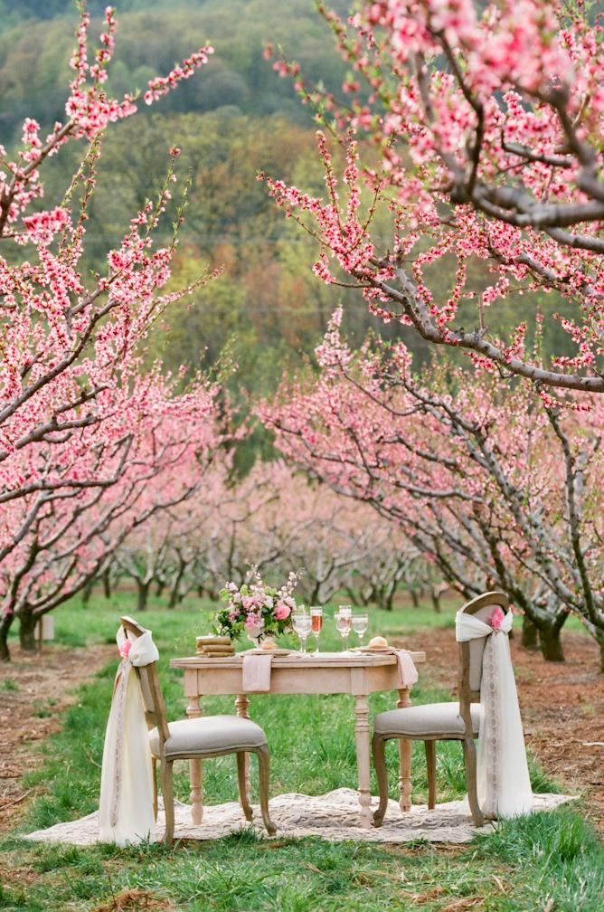 Southern Cherry Blossom Wedding Ideas Elizabeth Anne