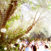Backyard Vineyard Wedding Ideas