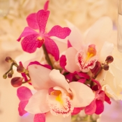 White and Purple Orchids Reception Florals