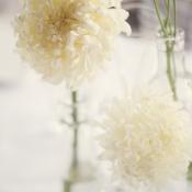 White Flowers in Glass Bottles